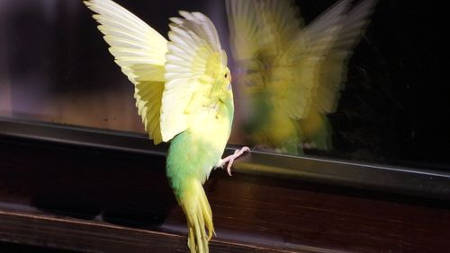all-west glass bird trying to fly to window